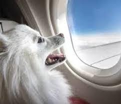 סוף להטסת בעלי חיים בתאי הנוסעים